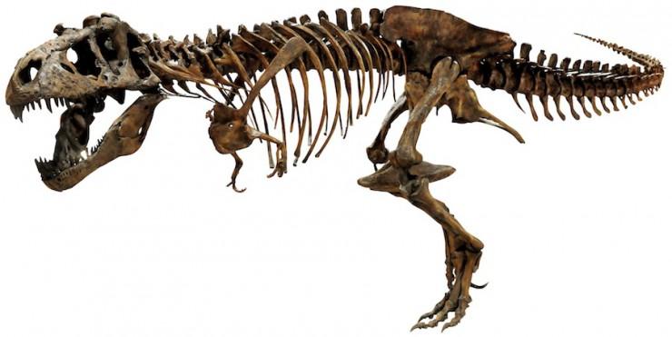 ティラノサウルスの画像 p1_25