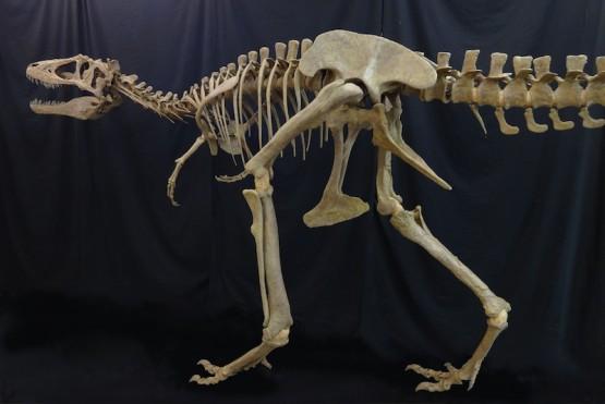 ライスロナックス 全身復元骨格