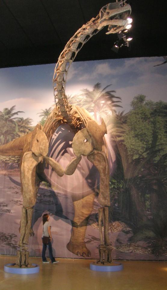 トゥリアサウルス 復元骨格(半身)© Fundación Dinópolis