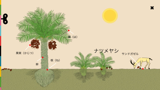 cocomag_Plants_02