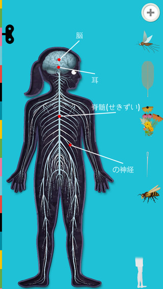 cocomag_The Human Body_01