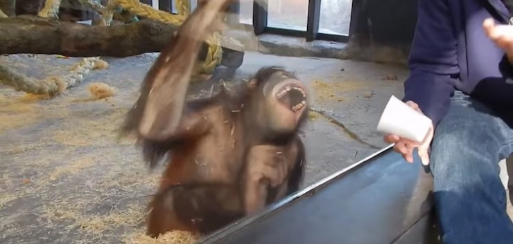 cocomag_2016_monky_11