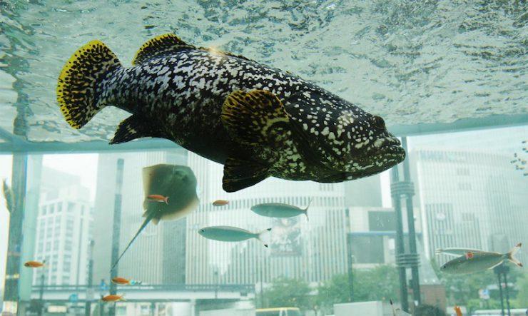 cocomag_Sony-Aquarium_2016_02